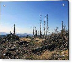 Landscape With Dead Old Trees In Poland, Beskid Slaski Near The Skrzyczne Peak Acrylic Print by Caio Caldas
