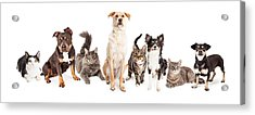 Large Group Of Cats And Dogs Together Acrylic Print by Susan  Schmitz