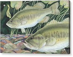 Largemouth Bass Acrylic Print by Paul Brent
