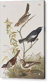 Lark Finch Prairie Finch Brown Song Sparrow Acrylic Print by John James Audubon