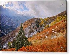 Last Fall Acrylic Print by Chad Dutson