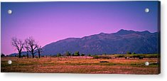 Late Afternoon In Taos Acrylic Print by David Patterson