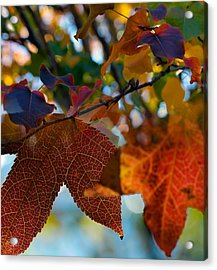 Late Autumn Colors Acrylic Print by Stephen Anderson