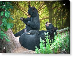 Laughing Bears Acrylic Print by John Haldane