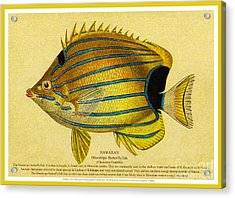 Lauhau - Bluestripe Butterflyfish Acrylic Print by James Temple
