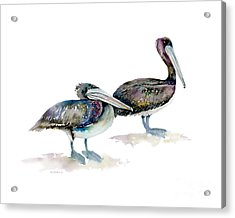 Laurel And Hardy, Brown Pelicans Acrylic Print by Amy Kirkpatrick