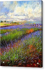 Lavender Field Acrylic Print by David Stribbling