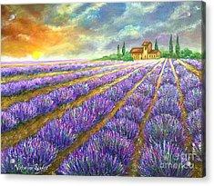 Lavender Field Acrylic Print by Viktoriya Sirris