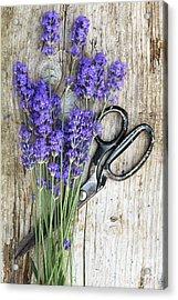 Lavender Harvest Acrylic Print by Tim Gainey