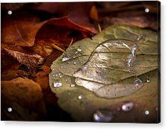 Leaf Pool Acrylic Print by Palosaari Photography