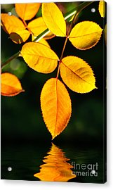 Leafs Over Water Acrylic Print by Carlos Caetano
