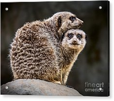 Lean On Me Acrylic Print by Jamie Pham