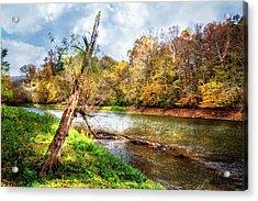Leaning Tree Acrylic Print by Debra and Dave Vanderlaan