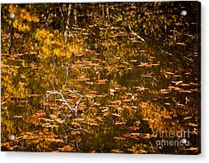 Leaves And Reflections Acrylic Print by Susan Cole Kelly