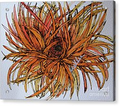 Leggy Gerber Acrylic Print by Marcia Weller-Wenbert