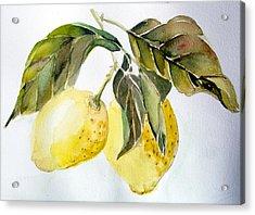 Lemons Acrylic Print by Mindy Newman