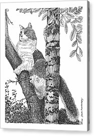 Leo The Cat In The Tree Acrylic Print by Jack Pumphrey