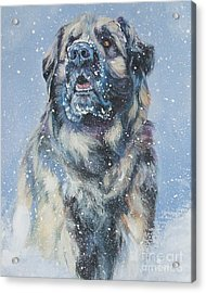 Leonberger In Snow Acrylic Print by Lee Ann Shepard