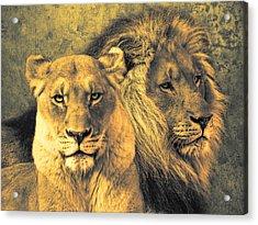 Leones Acrylic Print by Joachim G Pinkawa
