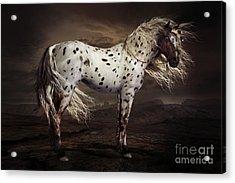 Leopard Appalossa Acrylic Print by Shanina Conway