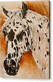 Leopard Appy Acrylic Print by Jani Freimann