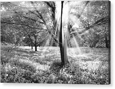 Let There Be Light Acrylic Print by Debra and Dave Vanderlaan