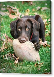 Let's Play Football Acrylic Print by Lori Deiter
