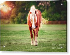 Let's Play Acrylic Print by Tamyra Ayles