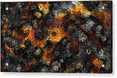 Lichen Acrylic Print by Frank Tschakert