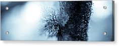 Lichen Macro 1206 Nature Abstract Acrylic Print by Frank Tschakert
