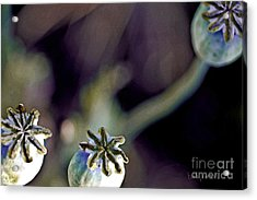 Life Force  Acrylic Print by Barb Pearson