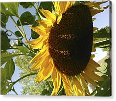 Life Is Good Acrylic Print by Jane Autry