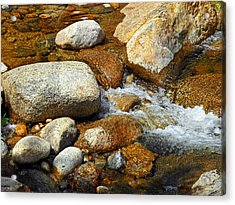 Life Of The Riverbed Acrylic Print by Lynda Lehmann