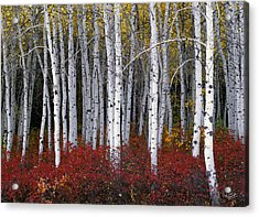 Light In Forest Acrylic Print by Leland D Howard