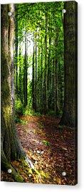 Light Through The Trees Acrylic Print by Meirion Matthias