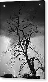 Lightning Tree Silhouette Portrait Bw Acrylic Print by James BO  Insogna