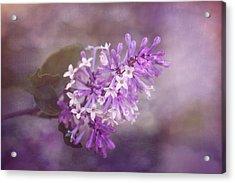 Lilac Blossom Acrylic Print by Tom Mc Nemar