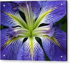 Lilied Acrylic Print by Vari Buendia