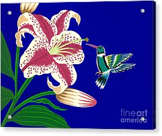 Lily And Hummingbird Acrylic Print by Lucyna A M Green