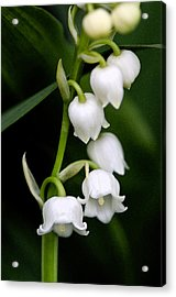 Lily Of The Valley Acrylic Print by Bobbi Smith