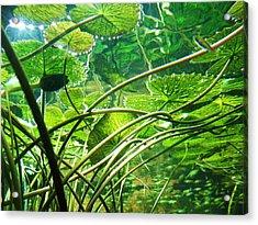 Lily Pads I Acrylic Print by Anna Villarreal Garbis