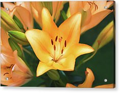 Lily Acrylic Print by Steven  Michael