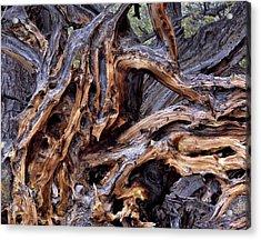 Limber Pine Roots Acrylic Print by Leland D Howard