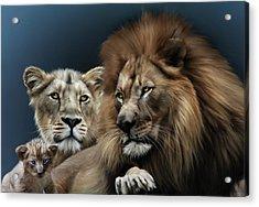 Lion Family Acrylic Print by Julie L Hoddinott