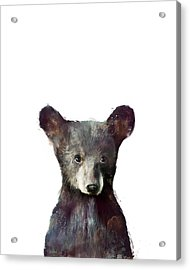 Little Bear Acrylic Print by Amy Hamilton