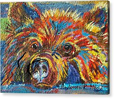 Little Bear Acrylic Print by Anderson R Moore
