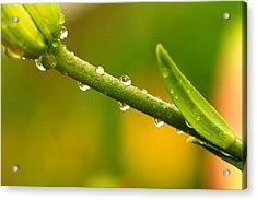 Little Drops Of Rain Acrylic Print by Amanda Kiplinger
