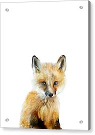 Little Fox Acrylic Print by Amy Hamilton