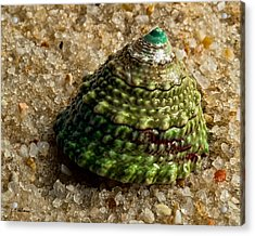 Little Green Turret Acrylic Print by Christopher Holmes