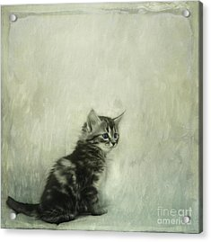 Little Kitty Acrylic Print by Priska Wettstein